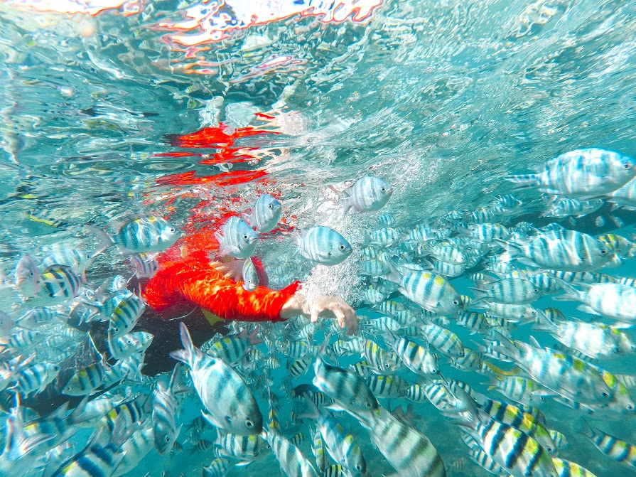 snorkeling di pulau lengkuas