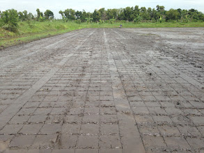 Photo: Photo of a field marked by a roller from a demonstration day at the Thai Weekend Farmers' Network, on the outskirts of Bangkok.  [Photo by Devon Jenkins, Thailand, 2014]