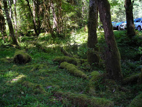 Photo: In the Hoh Rain Forest, Olympic National Park.