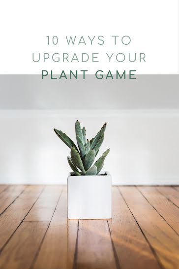 Upgrade Your Plant Game - Pinterest Pin Template