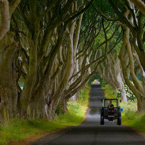 Irish road by Grzegorz Gluchy - Travel Locations Landmarks ( tree, road, irelan )