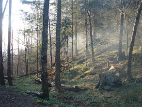 Photo: Morning at campsite29