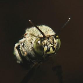 Macro by Prakash Tantry - Animals Insects & Spiders ( macro, beautiful, big eyes, colorful, wildlife,  )