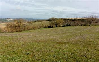 terrain à Teyssode (81)