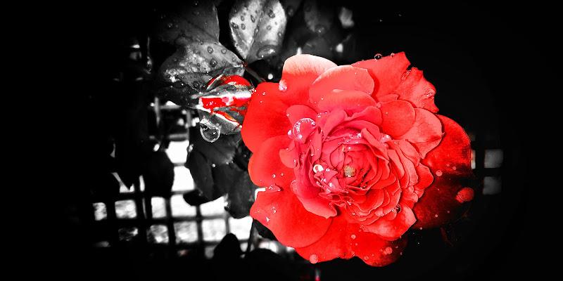 Il fiore di maggio  di Lulu77