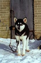 Photo: Alli 1999