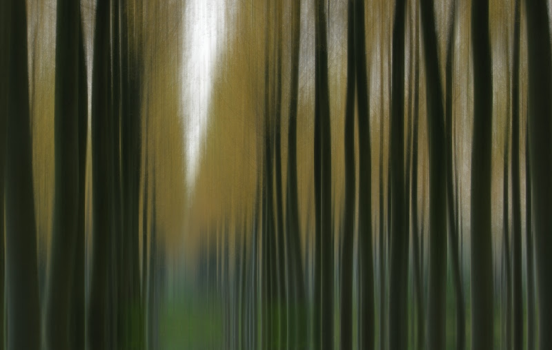 Minimal woods di gaspare_aita