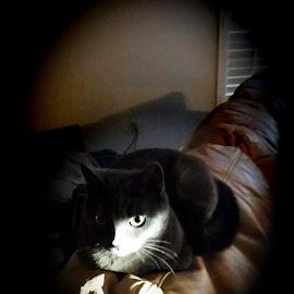 spy cat by Justin Case - Animals - Cats Portraits ( cat, portrait )