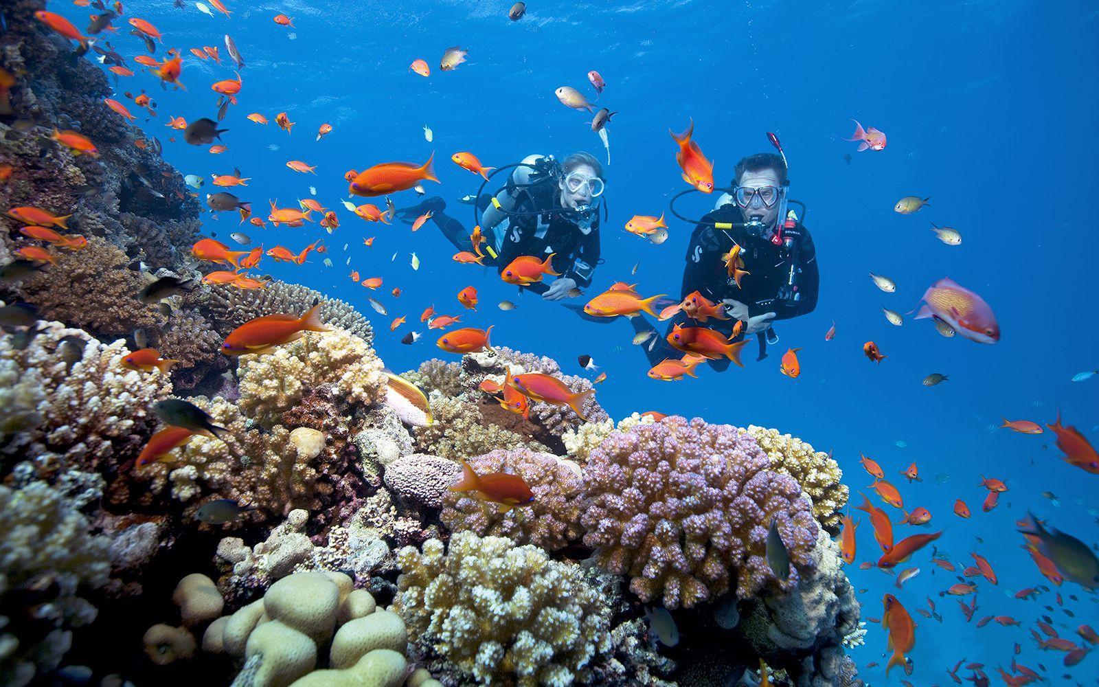 Lặn ngắm san hô ở bãi biển Hồng Vàn