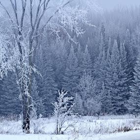 Haze And Glaze by Reva Fuhrman - Landscapes Prairies, Meadows & Fields (  )