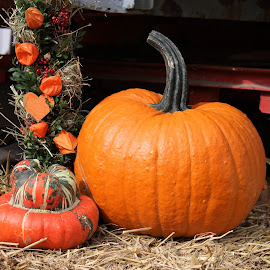 by Carola Mellentin - Public Holidays Halloween