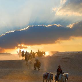 Thr riders by Ragai  Karas - Landscapes Travel ( sky, horses, sunset, travel, landscape, egypt )