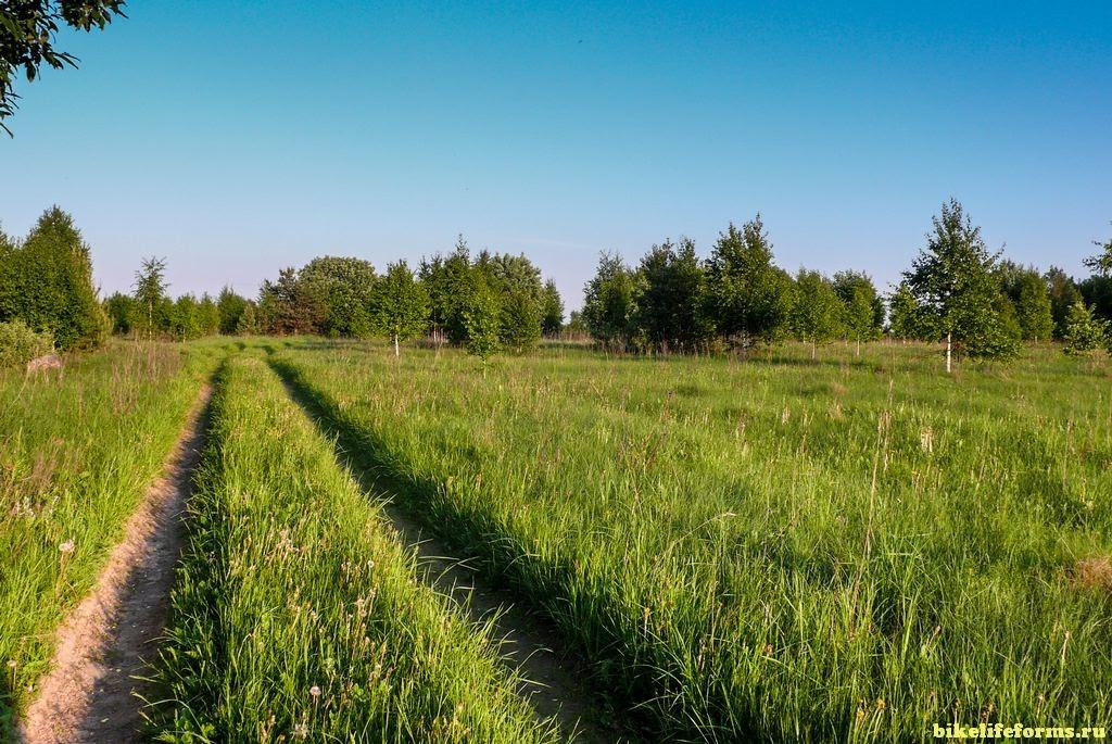 Дорога на Шостку