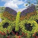 Garden Plants Ideas icon