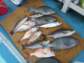"""Photo: こちらは""""ハマさん""""の釣果1 サイズのいいクチブトに真鯛、イサキ・・・"""