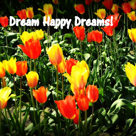 Dream Happy Dreams! by Becky Luschei - Typography Quotes & Sentences ( sleep, tulips, dream, happy, count, drift off )