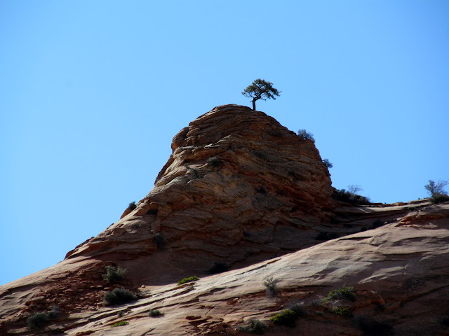 Tree on a sandstone knoll