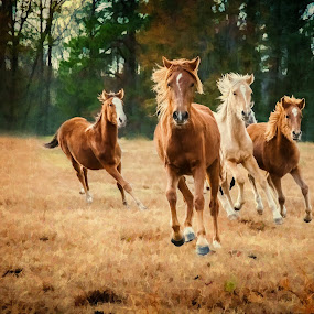 Run Free by Robert Mullen - Animals Horses ( field, gallop, horses, ponies, horse, pastures, trees, stables, running,  )