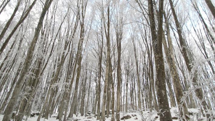 inverno si o inverno no di Dido2008