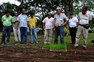 Photo: Oscar Montero (middle) is sharing his insights about seedling establishment and transplanting - on the first SRI demonstration plot on EARTH University campus