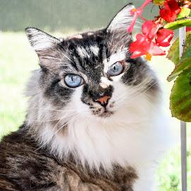 by Ashley Jill - Animals - Cats Portraits (  )