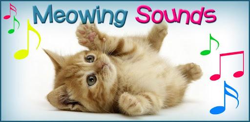 cat voice ringtone audio