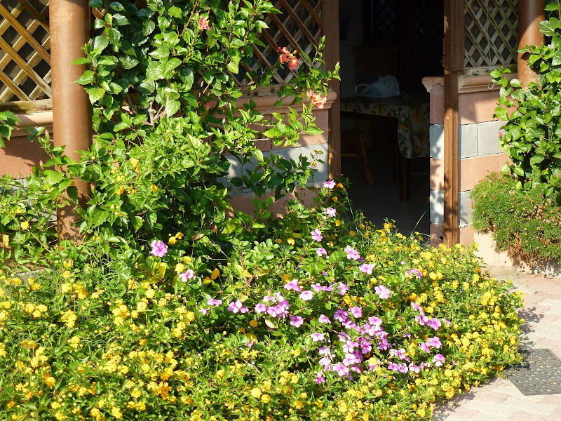 In mezzo ai fiori ed ad un passo dal mare di masaria24