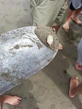Photo: A captured crab!