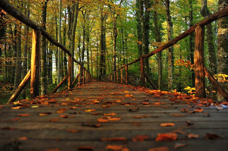 ingresso al bosco di Eric_Draven