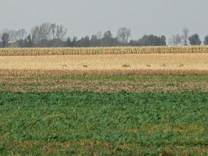 Photo: Z jednej strony towarzyszy nam widok na wypasające się sarny a z drugiej ...