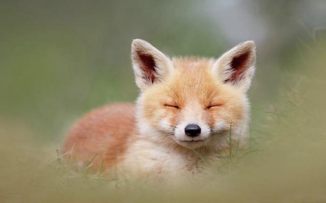 Search Kitsun