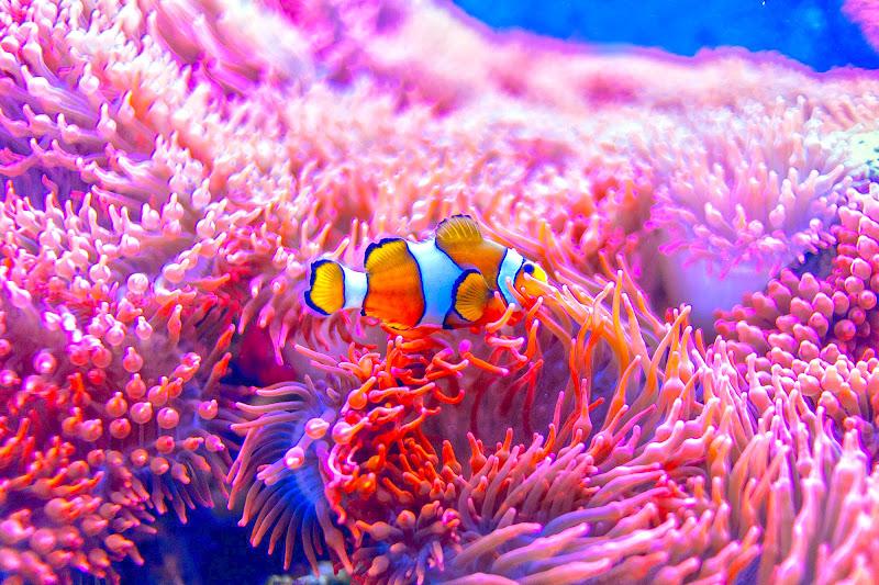 Nemo sei tu? di gds75photo