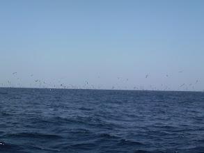 Photo: 今日は、ウキ流し真鯛釣り! おおー!あちこちの水面で鳥たちが!!