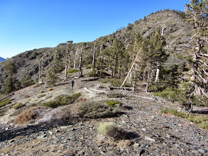 Photo: View north approaching the Pine/Dawson Saddle