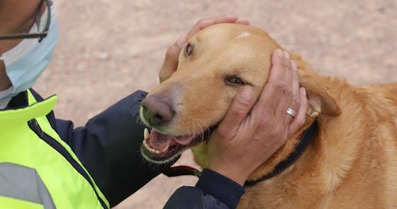 Almería, ciudad amiga de los animales