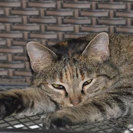 Sleepy kitty by JeremyKatie Green - Animals - Cats Portraits ( cats, tabby cat, sleeping, feline, felines )