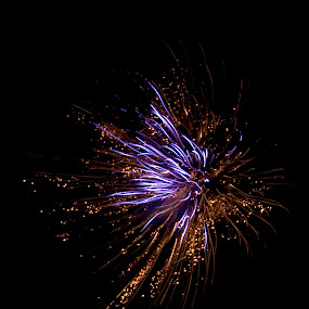 Happy Fouth by Brittany Humphrey - Abstract Fire & Fireworks ( excitement, abstract, fourth, holiday, enjoyment, happy, fireworks, july, loving, celebration, fun, celebrate )