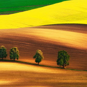Field family by Jozef Micic - Landscapes Prairies, Meadows & Fields ( field, waves, green, trees, brown, yellow, landscape )