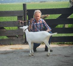 Photo: Rubriek 1: witte lammeren geboren in maart en april 2014.  1d. Marit.