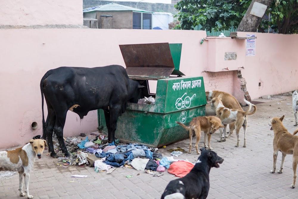 Street food in Agra