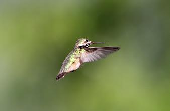 Photo: Buffalo Ranch - Kolibri