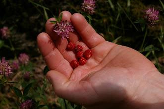 Photo: ... und massig Erdbeeren:-)