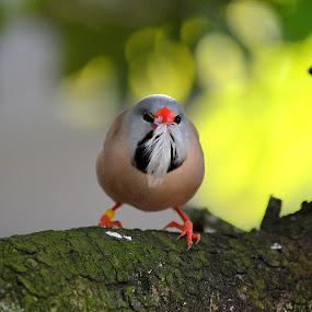 by Milton Moreno - Animals Birds (  )