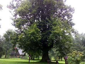 Photo: G8101213 Park podworski Wodzickich w Porebie Wielkiej
