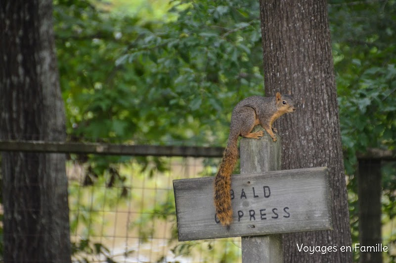 squirrel Vermilionville