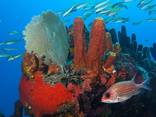 St. Eustatius created Statia National Marine Park to protect the coral reefs surrounding the island.