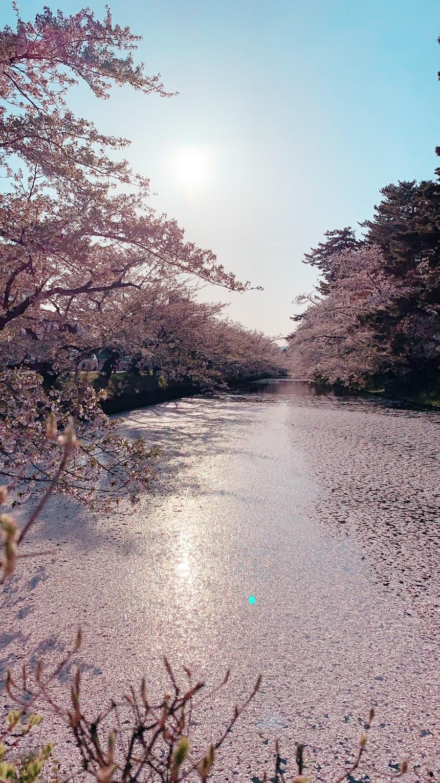 GW_yamamoto1