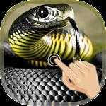 Magic Touch Cobra Attack