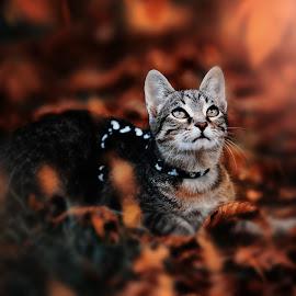 up by Krisztina Ajtai - Animals - Cats Portraits ( kitten, cat, animal, pet )