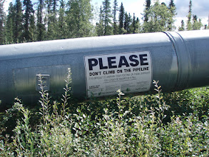 Photo: Pipeline in Coldfoot